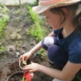 Julia-Dobgiert-Przesadzamy-roślinki